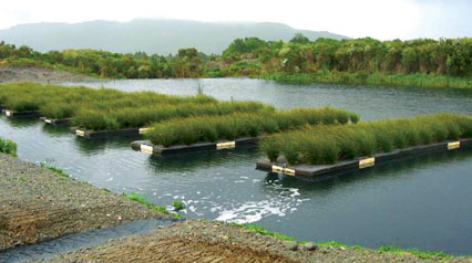 Demonstrating Treatment Of Landfill Leachate Using Floating Treatment Wetland Technology