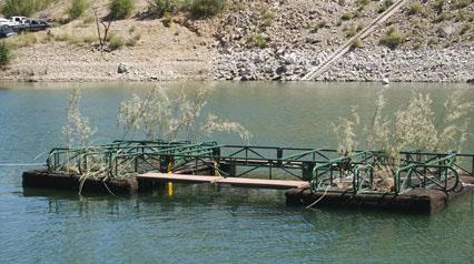 Floating Island Provides Bass Spawning Habitat