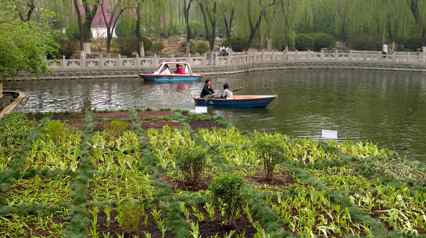 Nutrient Removal And Algae Control Project in An Urban Lake In China