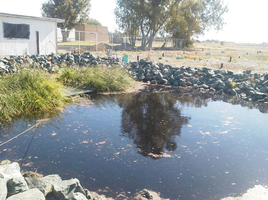 Nutrient Removal with Active BioHaven® Floating Treatment Wetlands