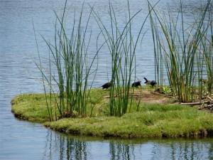 island with birds