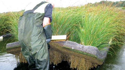 Floating Islands Outperform Constructed Wetlands