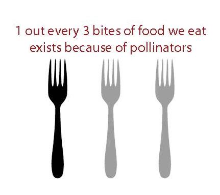 pollin fact